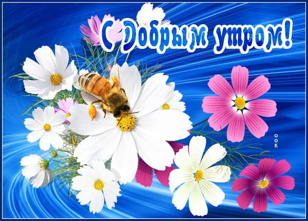 Открытка картинка доброе утро с цветами