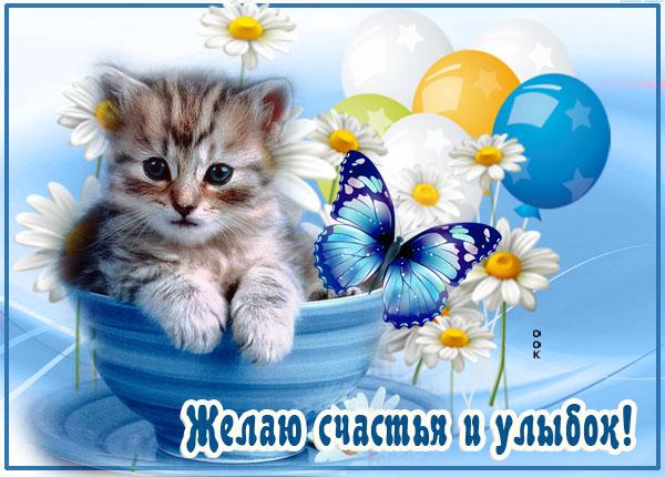 Картинка картинка с пожеланиями с котикам