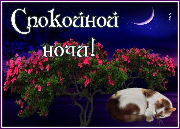 Картинка картинка спокойной ночи с кошкой