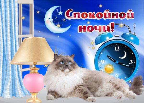 Открытка картинка спокойной ночи с котиком