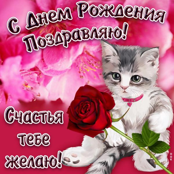 Открытка красивая картинка с днём рождения с котиком