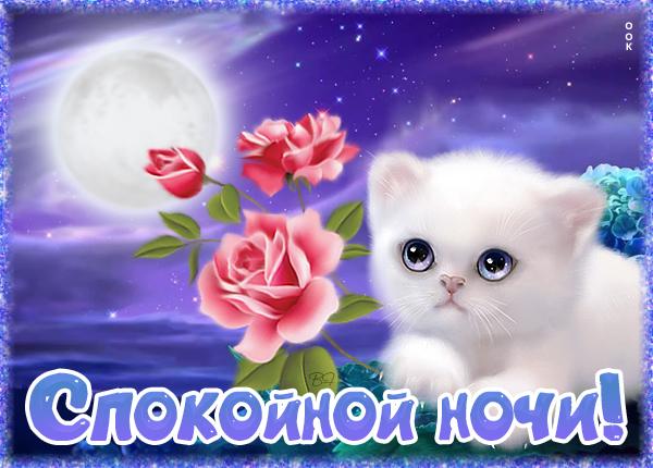 Картинка необычная картинка спокойной ночи с котиком
