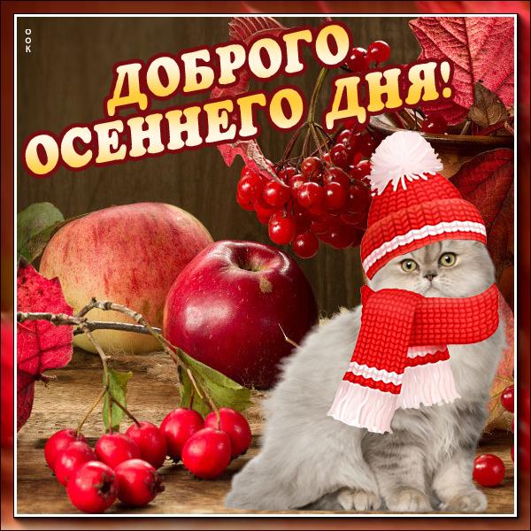 Открытка открытка добрый день с котиком