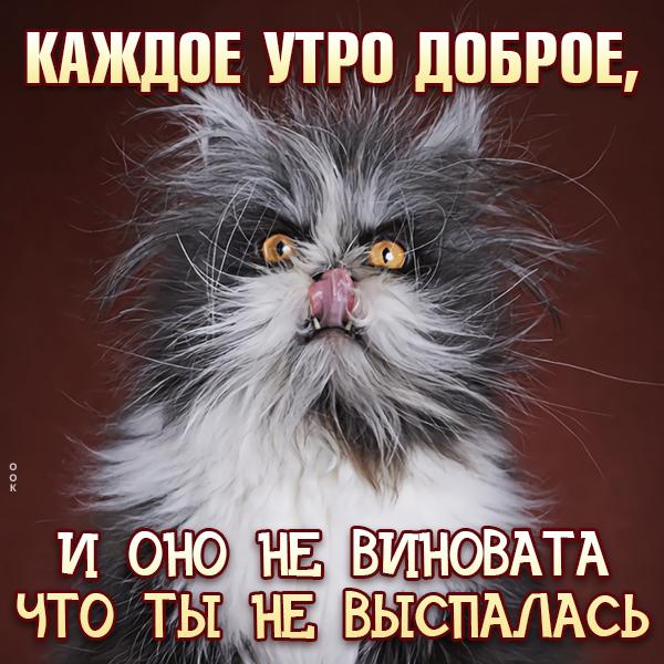 Картинка смешная картинка с  добрым утром, каждое утро доброе и оно не виновата что ты не выспалась