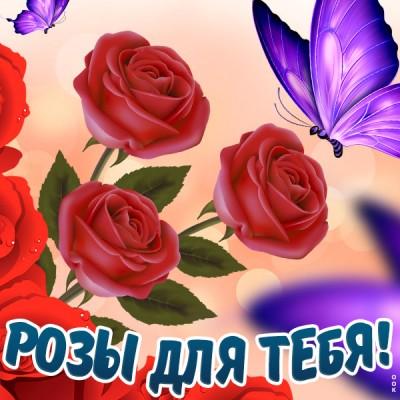 Картинка чудесная картинка с розами