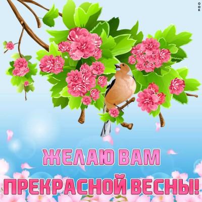 Картинка чудесной весны желаю всем моим близким