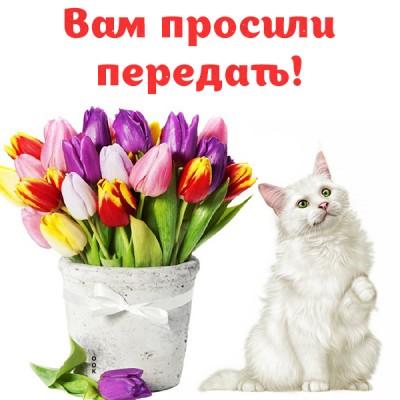 Открытка для тебя, тюльпаны нежные от меня