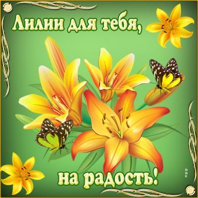 Картинка эти лилии для тебя от души дарю любя 16500 просмотров