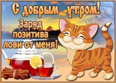 Картинка картинка доброе утро с котенком