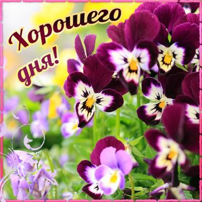 Открытка картинка хорошего дня с цветами