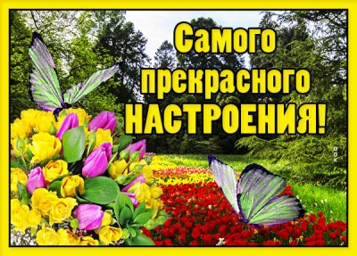 Картинка картинка хорошего настроения с бабочкой