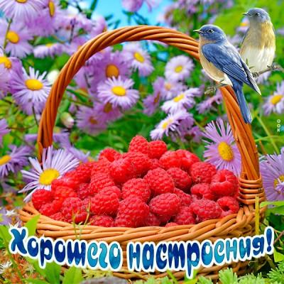 Картинка картинка хорошего настроения с птичкой
