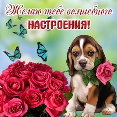 Картинка картинка хорошего настроения с собачкой