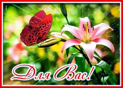 Открытка картинка лилии с надписью