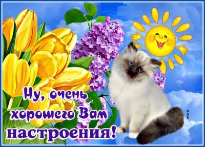 Открытка картинка прекрасного настроения с котом