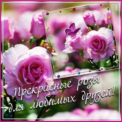 Картинка картинка прекрасные розы для вас