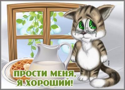 Открытка картинка прости с котиком