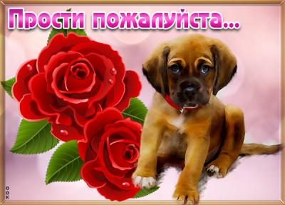 Открытка картинка прости с розой
