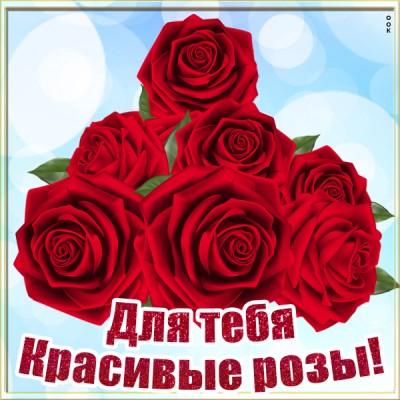 Картинка картинка с красными розами