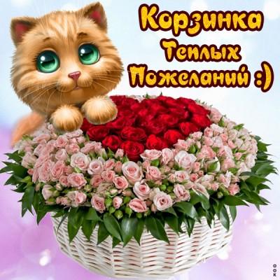 Картинка картинка с пожеланиями с котиками