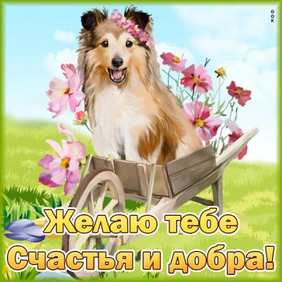 Картинка картинка с пожеланиями желаю тебе счастья и добра с собачкой