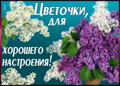 Картинка картинка с цветами от души