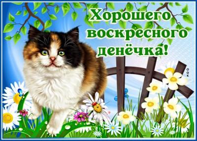 Картинка картинка с воскресеньем с котиком
