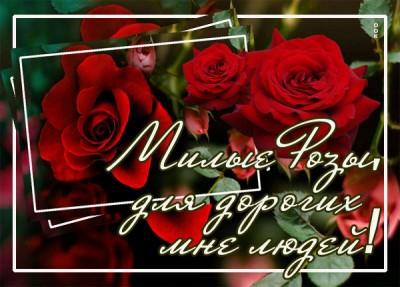 Открытка картинка  шикарные розы для тебя