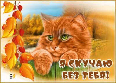 Картинка картинка скучаю с кошкой