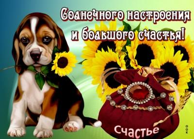 Картинка картинка солнечного настроения и большого счастья