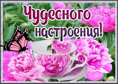 Картинка картинка цветочного настроения
