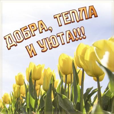 Открытка картинка желтые тюльпаны и пожелания