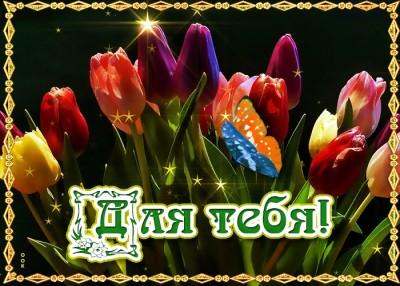 Открытка классная картинка с тюльпанами