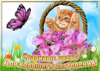 Картинка красивая картинка для девушки с цветами