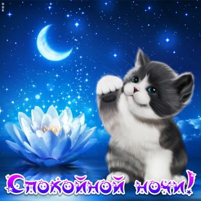 Картинка красивая картинка спокойной ночи с котиком