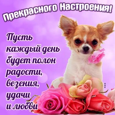 Картинка красивая открытка хорошего настроения