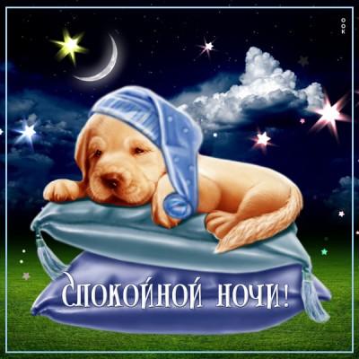 Картинка милая картинка с собачкой