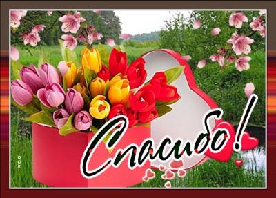 Открытка милая картинка спасибо с цветами