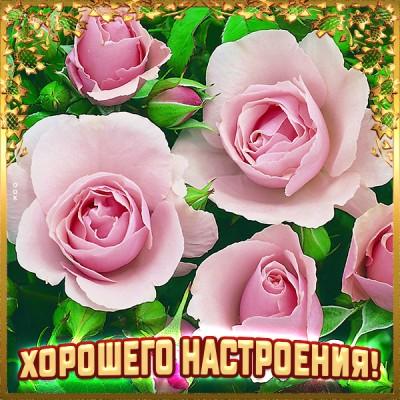 Открытка открытка хорошего  настроения с розами