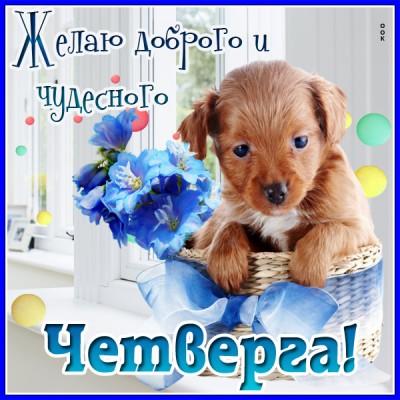 Картинка открытка счастливого четверга