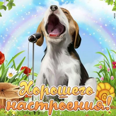 Открытка прикольная картинка хорошего настроения с собачкой