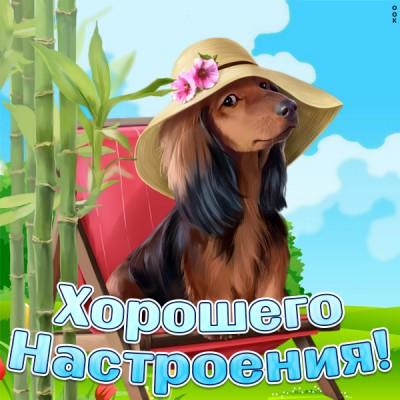 Открытка замечательная картинка для настроения с собачкой